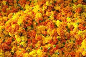 goudsbloem achtergrond foto