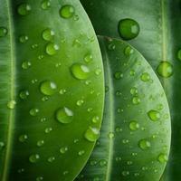 waterdruppels op bladeren foto