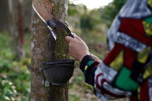 vrouw die latex op de rubberboom verzamelt foto