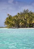 het tropische eiland met palmbomen in zee foto