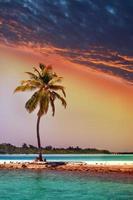 eenzame palmboom in de zee bij zonsondergang foto