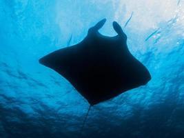 sloot de manta ray in het noorden van andaman, thailand foto