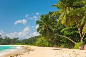 tropisch strand op het eiland Mahé Seychellen foto