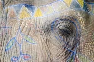 close up van een olifant oog foto