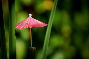 cocktailparaplu op tropische achtergrond foto