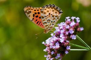 vlinder op bloemen foto