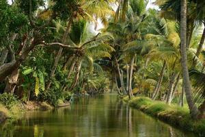 staat Kerala in India foto
