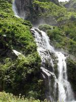 Grand Himalaya-waterval veroorzaakt mist in een bos