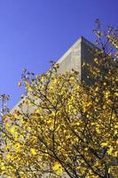 schittering van de herfst op de universiteitscampus