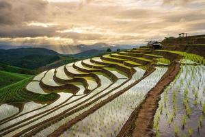 terrasvormig padieveld in mae cham, chiangmai, thailand.
