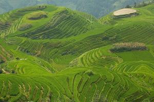 longji rijstvelden foto