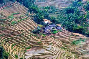 vietnam, sapa - rijstvelden foto