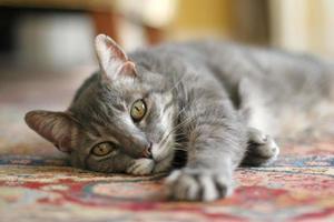 kat genaamd hector