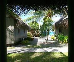 tropische tuin foto