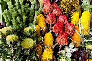 Australische banksia en waratah wilde bloemen foto