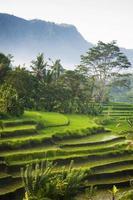 Bali rijstvelden foto