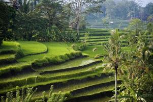Bali, Indonesië. foto