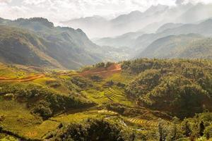 rijstvelden op Vietnam