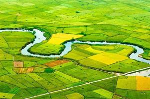 rijst veld in de oogsttijd in bac son valley, lang son, vietnam foto