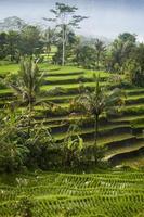 Bali, Indonesië.
