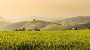 terrasvormige rijstveld