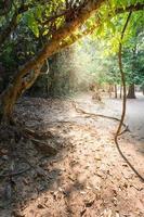 ta prohm tempel in Siem Reap, Cambodja foto