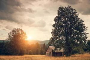 hut op het veld