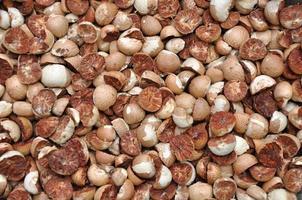 gesneden betelnoot of areca catechu was droog foto