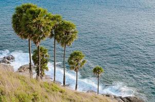 palmboom naast phromthep cape, phuket provincie van thailand. foto