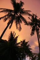 zonsondergang palmen Filipijnen strand oranje hemel foto
