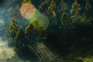 zonnestraal op bomen foto