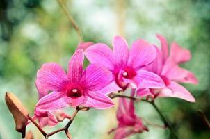 prachtige paarse orchidee foto