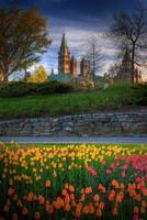 tulpen en parlementsgebouw ottawa foto