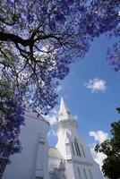 kerk en jacaranda bloeit