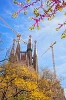 sagrada familia met bloeiende sakura in barcelona, spanje