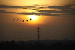 zonsopgang met hoogspanningspalen