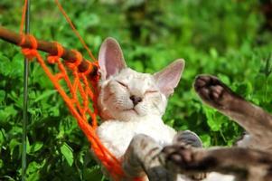 kat in het weekend foto