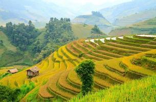terrasvormige velden, yen bai, vietnam foto