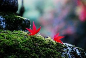 de gekleurde bladeren die door mos glanzen foto