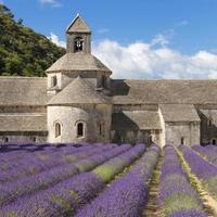 abdij van senanque en lavendelveld