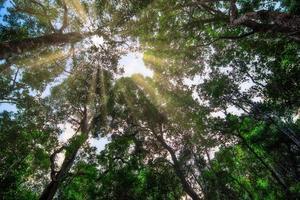 natuur en bos foto