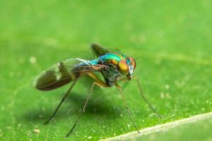 macro vlieg op blad foto