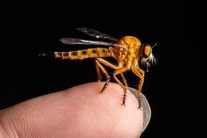 rover vliegen op vinger