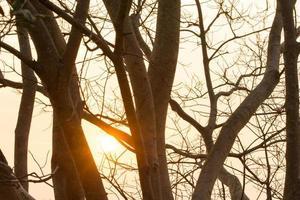 silhouet van bomen in de schemering