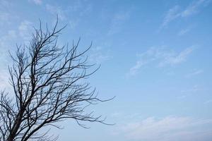 dode boom reikt naar de hemel foto