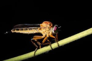 rover vliegen in de natuur foto
