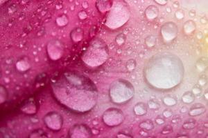 macro waterdruppeltjes op bloem foto