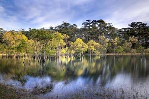 bomen en rivier onder bewolkte hemel foto