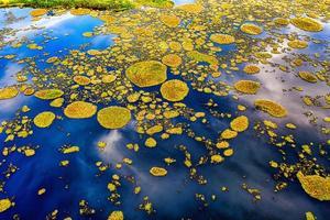 mos op blauw water foto