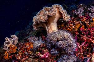 bruin koraalrif onder water foto
